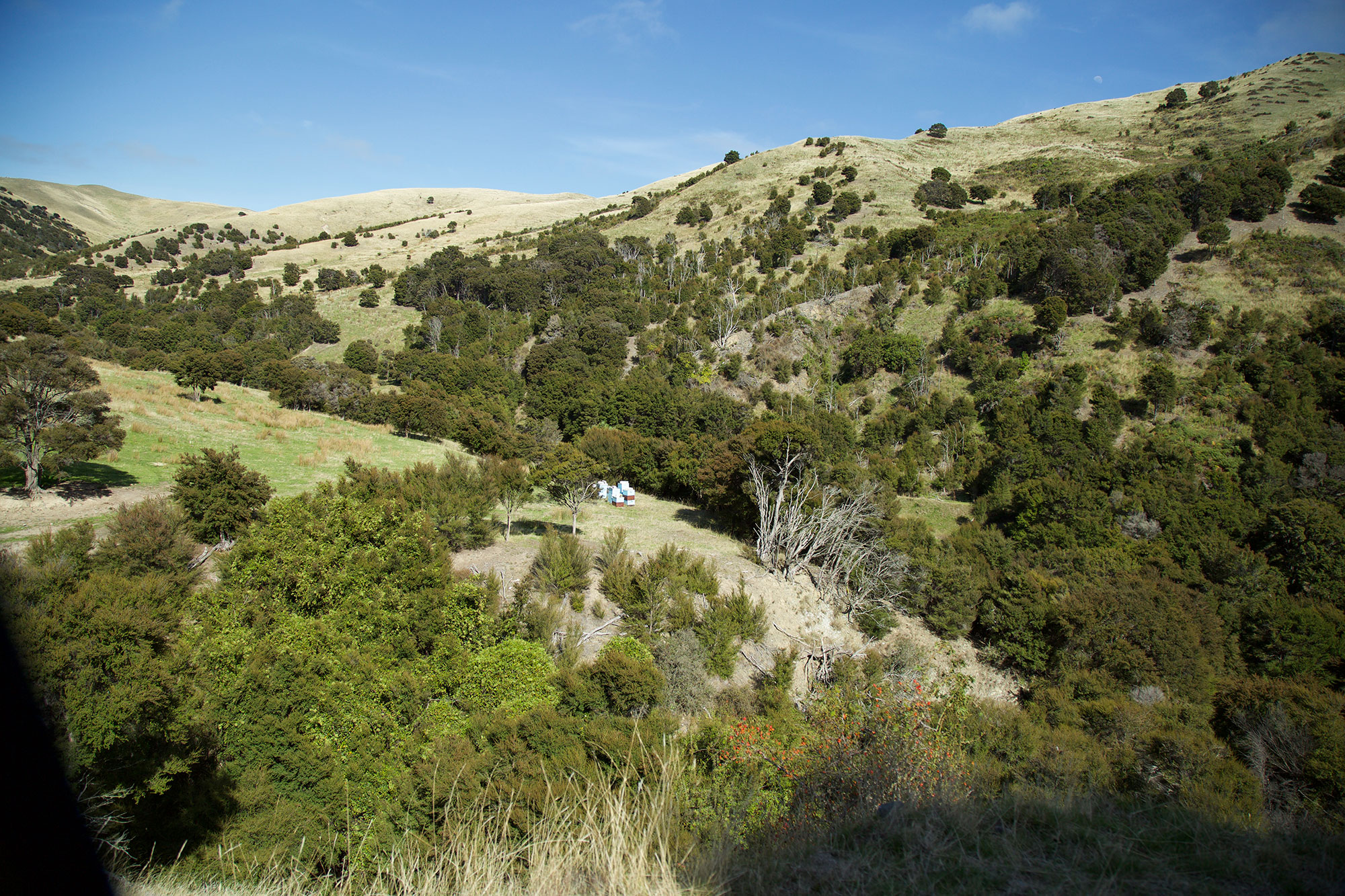 Landschaft in Neuseeland