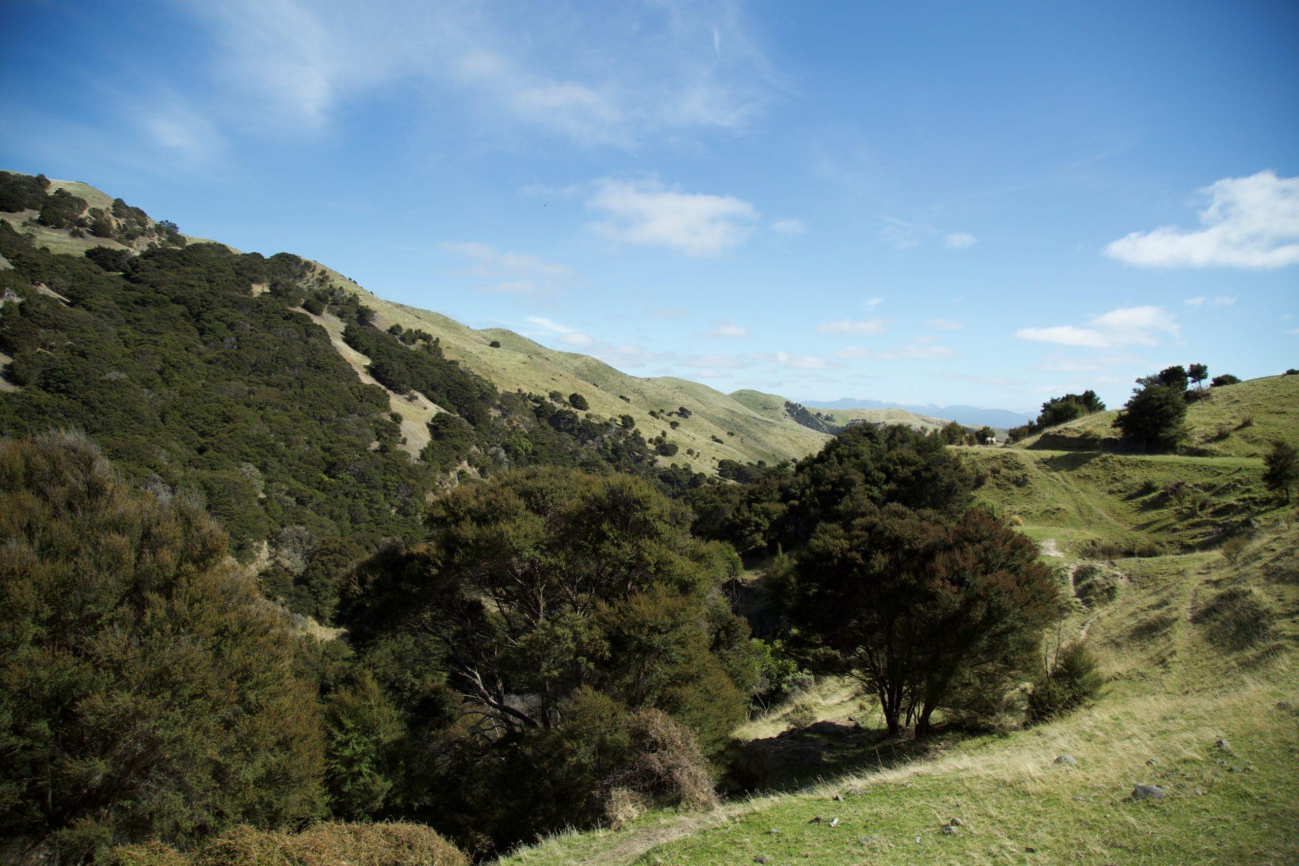 Landschaft in Neuseeland - Hier wächst der Teebaum